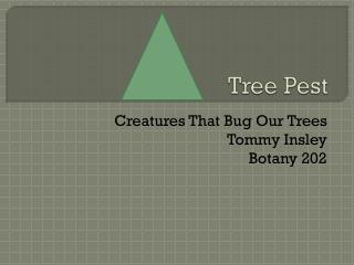 Tree Pest