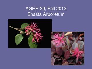AGEH 29, Fall  2013 Shasta Arboretum