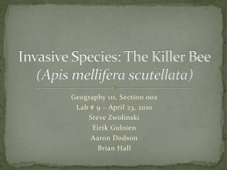 Invasive Species: The Killer Bee ( Apis mellifera scutellata )