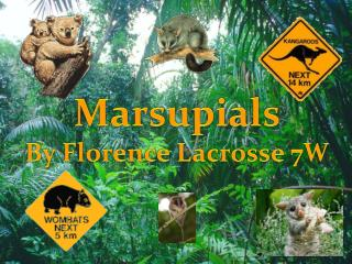 Marsupials By Florence Lacrosse 7W
