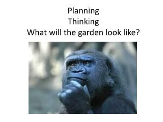 Planning Thinking  What will the garden look like?