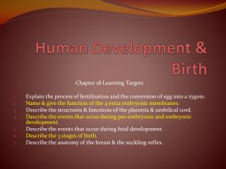 Human Development & Birth