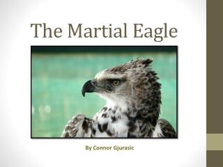 The  M artial Eagle