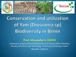Conservation and utilization of Yam (Dioscorea sp) Biodiversity in Benin