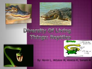 Diversity Of  Living Things: Reptiles