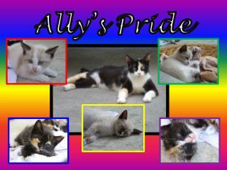 Ally's Pride