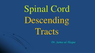 Spinal Cord Descending Tracts