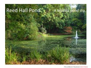 Reed Hall Pond