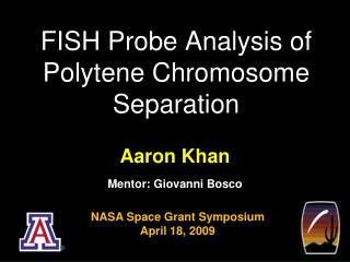 FISH Probe Analysis of  Polytene  Chromosome Separation
