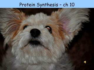 Protein Synthesis –  ch 10