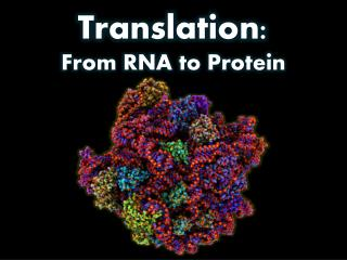 Translation: From RNA to Protein