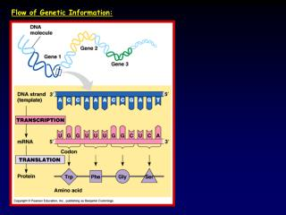 Flow of Genetic Information: