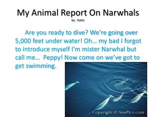 My Animal Report On  Narwhals by  : Katie