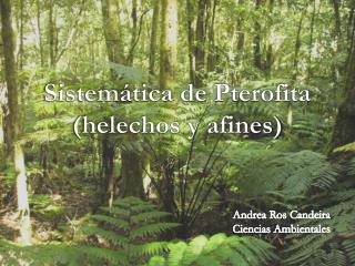 Sistemática de  Pterofita (helechos y afines)