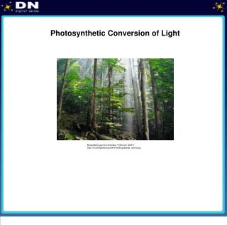 Photosynthetic Conversion of Light