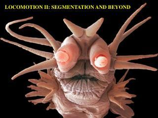 LOCOMOTION II: SEGMENTATION AND BEYOND