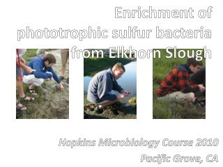 Enrichment of phototrophic sulfur bacteria from Elkhorn Slough