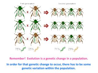 Remember!  Evolution is a genetic change in a population.