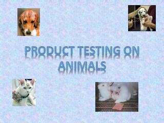 Product Testing on Animals