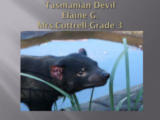 Tasmanian Devil Elaine  G. Mrs.Cottrell -Grade 3