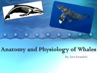 Anatomy and Physiology of Whales