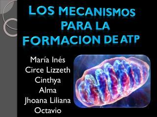 María Inés Circe Lizzeth Cinthya Alma Jhoana Liliana Octavio