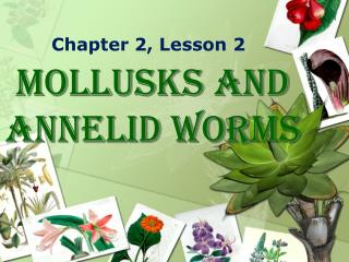 Mollusks  and  Annelid  Worms