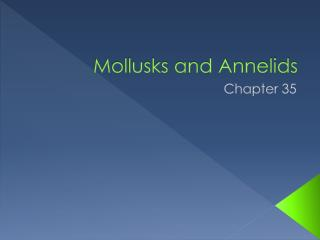 Mollusks and Annelids