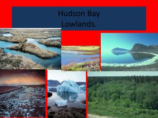 Hudson Bay  Lowlands.