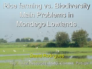 Rice  farming vs. Biodiversity  Main Problems in  Mondego  Lowlands