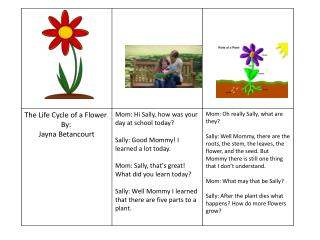 the life cycle of a flower photo story