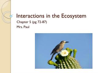 Interactions in the Ecosystem