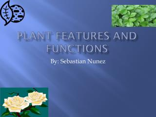 Plant fe a tures and functions