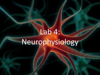 Lab 4: Neurophysiology
