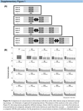 Supplementary Figure  1
