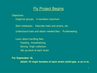 Fly Project Begins