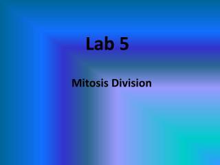Lab 5