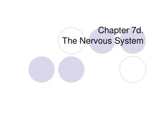 Chapter 7d. The Nervous System