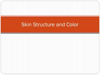 Skin Structure and Color