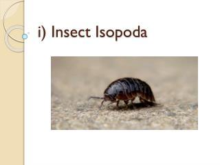 i) Insect Isopoda