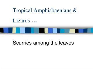 Tropical Amphisbaenians & Lizards 3-15-06