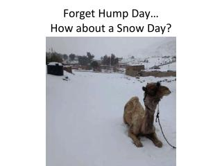 Forget Hump Day… How about a Snow Day?