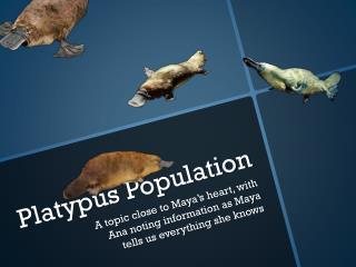 Platypus Population