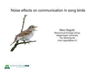 Noise effects on communication in song birds