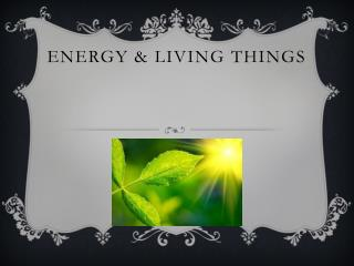 Energy & Living Things