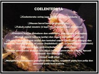 COELENTERATA  Coelenterata sering juga disebut dengan Cnidaria Hewan bersel banyak (multiseluler)