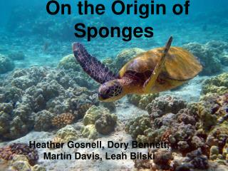 On the Origin of Sponges