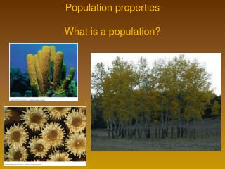 Population properties What is a population?