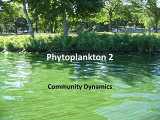 Phytoplankton 2