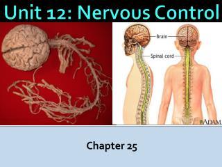 Unit 12: Nervous Control
